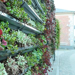 Grønne vægge fra BGreen-it