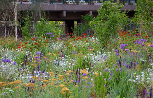 For Nigel Dunnett handler det om at få plantesamfund til at fungere sammen - smukt og naturligt. Foto: Nigel Dunnett