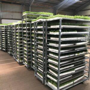 Biotop-plugs klar til udplantning