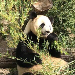 Pandaanlægget Kbh. Zoo